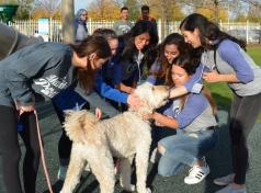 Mazel Paws Fundraiser Benefits JCFS Therapeutic Day School
